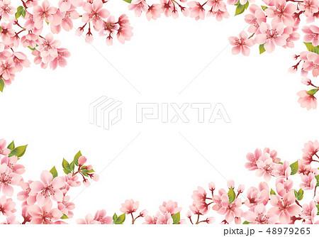 桜の背景素材 48979265