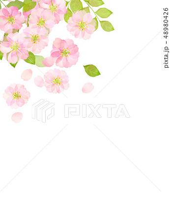 桜 水彩風 テクスチャー 48980426