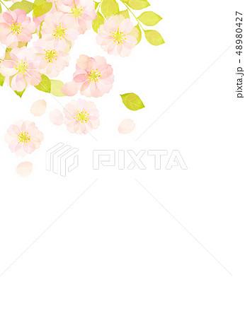桜 水彩風 テクスチャー 48980427