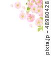 桜 桜模様 桜吹雪のイラスト 48980428