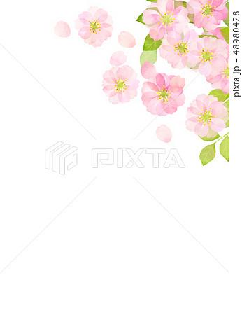 桜 水彩風 テクスチャー 48980428