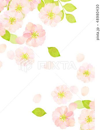 桜 水彩風 テクスチャー 48980430