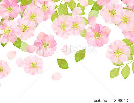 桜 水彩風 テクスチャー 48980432