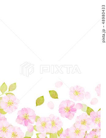 桜 水彩風 テクスチャー 48980433