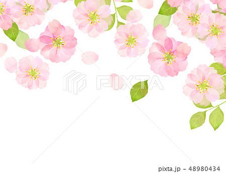 桜 水彩風 テクスチャー 48980434
