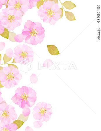 桜 水彩風 テクスチャー 48980436