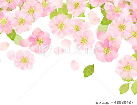 桜 水彩風 テクスチャー 48980437