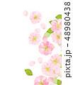 桜 桜吹雪 春のイラスト 48980438