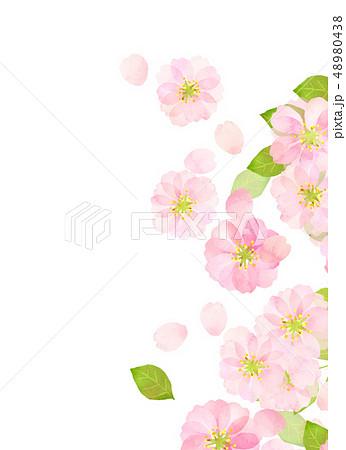 桜 水彩風 テクスチャー 48980438