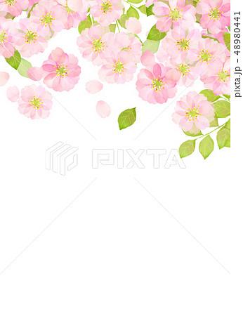 桜 水彩風 テクスチャー 48980441