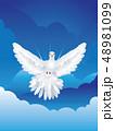 鳩 ハト ホワイトのイラスト 48981099