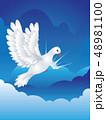 鳩 ハト ホワイトのイラスト 48981100