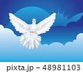 鳩 ハト ホワイトのイラスト 48981103