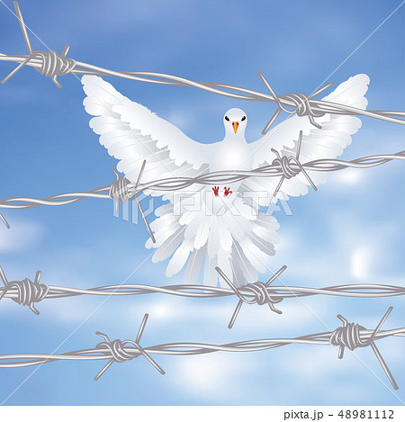 Dove and Barbed Wire 48981112
