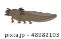 ウーパールーパー 全身 Axolotl マーブル 48982103