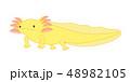 ウーパールーパー 全身 Axolotl 黄色 48982105
