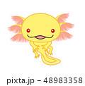 ウーパールーパー 全身 Axolotl ゴールデン アルビノ 48983358