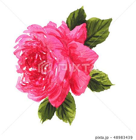 rose19318pix7 48983439