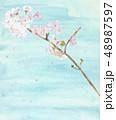 桜 さくら 花吹雪 満開 青空 48987597