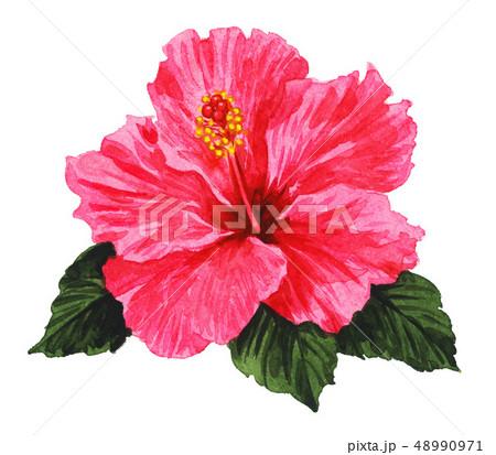 hibiscus19319pix7 48990971