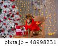 クリスマス わんこ 犬の写真 48998231