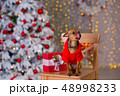 クリスマス わんこ 犬の写真 48998233