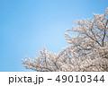 桜 空 春 49010344