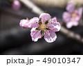 桜 春 外出 49010347