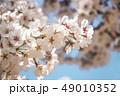 桜 春 外出 49010352