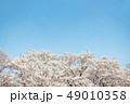 桜 春 外出 49010358