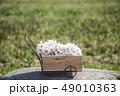 桜 ワゴン 芝生 49010363