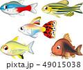 熱帯魚 淡水かわいい系 EPS ベクター 49015038