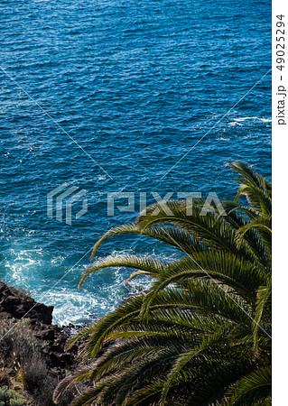 beautiful view on blue ocean water and palm tree 49025294
