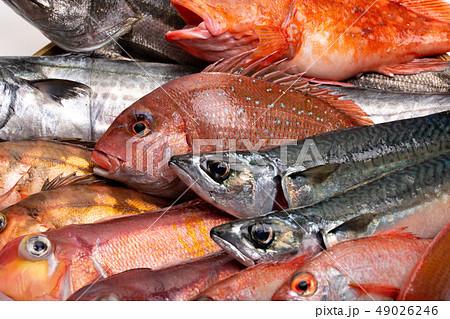 魚 色々 49026246