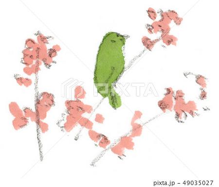 桜の花をメジロがついばんでいる春の風景イラスト 49035027
