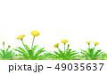 たんぽぽ透過素材 水彩調 49035637