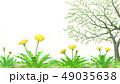 たんぽぽと葉桜透過素材 水彩調 49035638