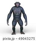 猿 49043275