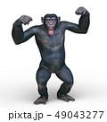 猿 49043277