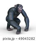 猿 49043282