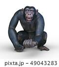猿 49043283
