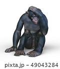 猿 49043284
