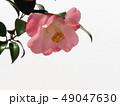 椿 49047630