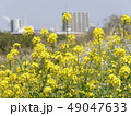 菜の花 49047633