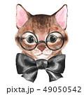 ねこ ネコ 猫のイラスト 49050542