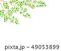 背景素材_木の枝 49053899