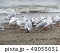 冬 白色 水の写真 49055031
