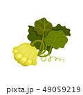 マンガ 収穫 実りのイラスト 49059219