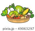 野菜 収穫 食材のイラスト 49063297