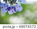 花 アジサイ アップの写真 49074572